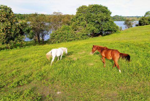 os cavalos do paraíso dangelo